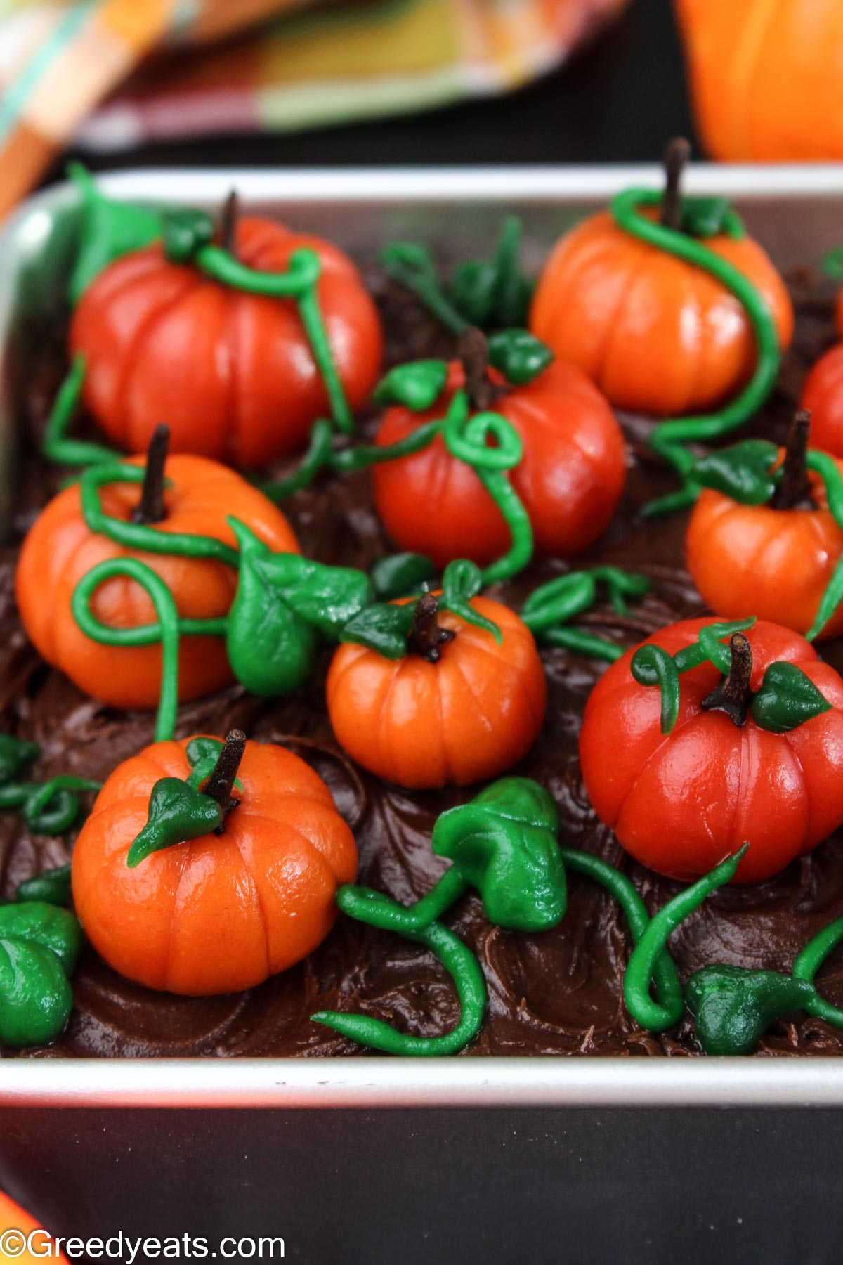 Pumpkin cake in an square pan topped with chocolate ganache and fondant pumpkins.